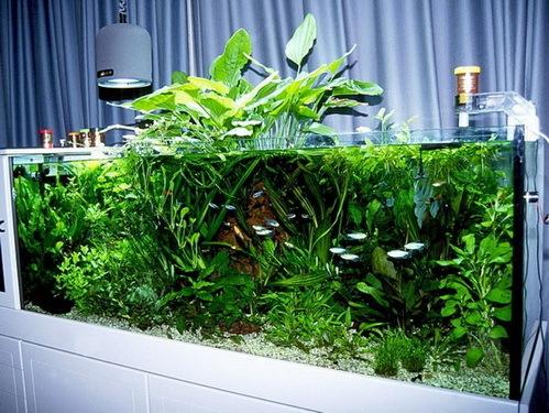 Какие аквариумные растения можно выращивать в теплице?